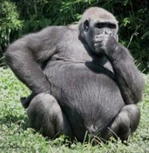 Gorilla-Thought